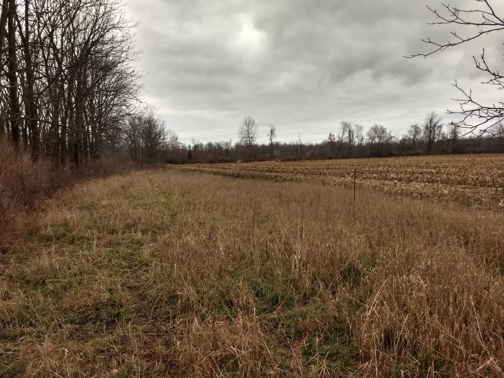 Grey Winter Day on the meadow