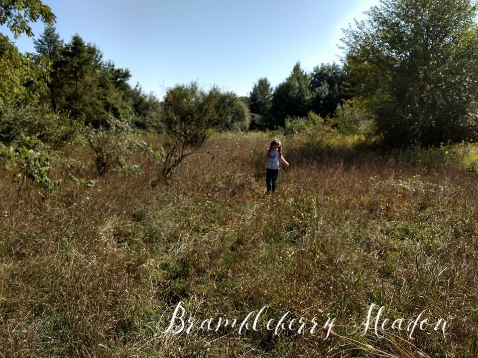 Brambleberry Meadow – Fall