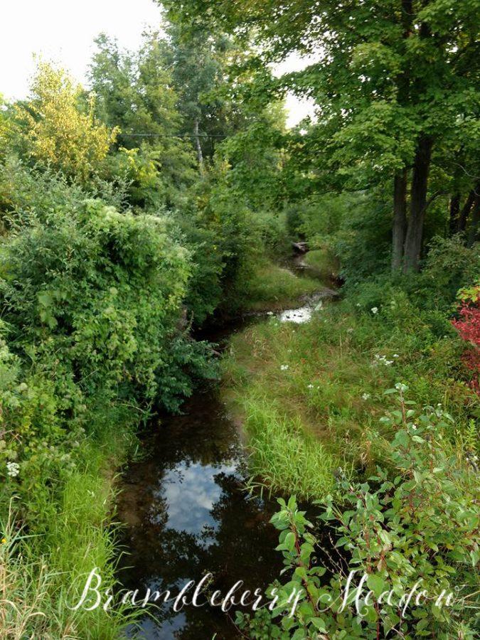Brambleberry Meadow – Summer